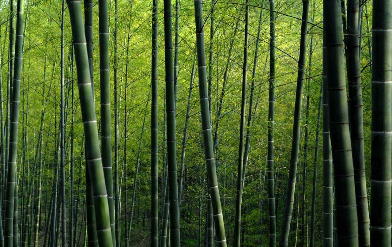 bamboo_prueba